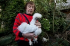 Hobby breeder Billy Farnell will need a licence to keep more than six hens. Photo / Brett Phibbs