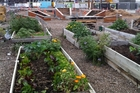 FROM RUINS: The Agropolis urban farm sits alongside the restoration of Christchurch.