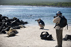 The sea lions of Espanola Island in the Galapagos are a magnet for the cameras of visitors to the place that inspired Charles Darwin. Photo / Supplied