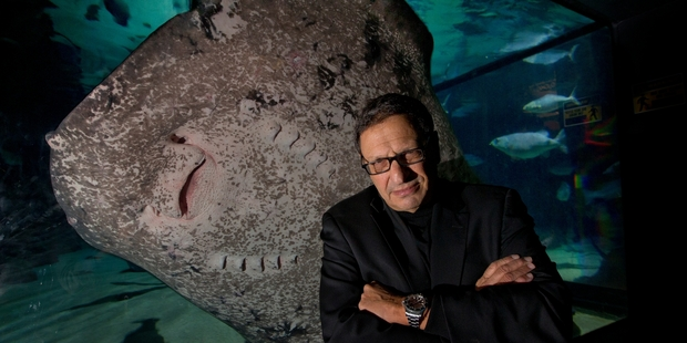 David Doubilet's photo exhibition gives rare insight into diverse sea life from tropical waters to the Antarctic oceans. Photo / Brett Phibbs