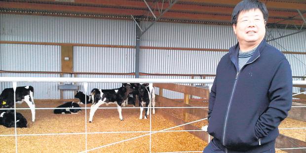Shanghai Pengxin Chariman Jiang Zhaobai visiting a Waikato dairy farm. Photo / File