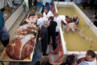 A colossal squid fished up in the Ross Sea in 2007 was then the largest found anywhere in the world. Photo / File