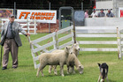 Keith Satchwell, formerly of Tutira now of Mangaroa, competing at last years Hawke's Bay Show. Photo / Doug Laing