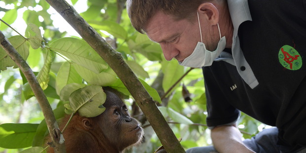Dr Ian Singleton has dedicated his life to protect the orangutan. Photo / Supplied