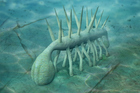 Hallucigenia, an invertebrate with rounded head at one end, and a long, fleshy tail, from the Cambrian era. Photo / Getty