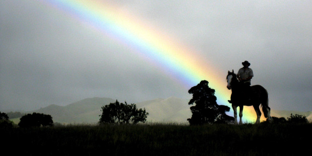 A rider on horseback near Te Kauwhata. Photo / Alex Robertson