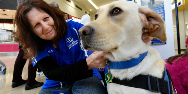 Reporter Sandra Conchie with 8-month-old Logan, one of the Assistance Dogs New Zealand Trust dogs in training, spent the day helping collect much needed funds.