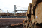 New Zealand is the world's biggest supplier of softwood logs. Photo / APN