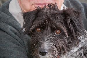 Hastings man Terry Franklin's jack russell/Tibetan terrier cross named Poppy. Photo / Glenn Taylor