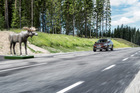 Volvo's moose test at its new Proving Ground. Photos/Supplied