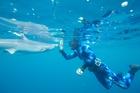Alana with shark scientist Riley Elliot.