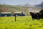 A milk tanker leaves Fonterra's Te Rapa dairy factory. Photo / Christine Cornege