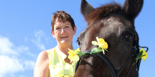 Jan Ferguson will be out and about in Tauranga CBD collecting for Daffodil Day riding her horse Shadow