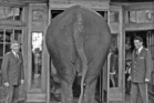 An elephant visits Badrutt's Palace Hotel in St Moritz, Switzerland. Photo / Supplied