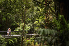 Exploring the Daintree Rainforest by elevated boardwalk is an immersive experience. Photo / Getty Images