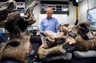 Paleontologist Kenneth Lacovara with vertebrae from a Dreadnoughtus schrani at Drexel University in Philadelphia. Photo / AP