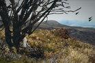A still from Elliot Collis' game Desolate. Photo / Kickstarter