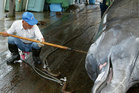 A Japanese whaler cleans and cuts meat from a whale at Wada Port in Chiba-Prefecture, Japan. Photo / Getty Images
