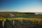 Yealands Family Wines claims to be the most sustainable wine producer in the world. Photo / Supplied
