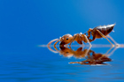 A colony of ants is aboard the International Space Station for a science experiment. Photo / Thinkstock