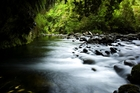 Te Awaroa Foundation aims to have 1000 rivers across New Zealand safe enough to swim in by 2050. Photo / David White