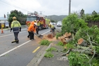 TRUNK CALL: Emergency workers clear the fallen tree and keep traffic moving along the one open lane on Western Hills Drive. PHOTO/LINDY LAIRD