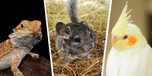 Adorable alternative pets. Photo / Thinkstock