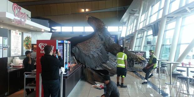 Eagle at Wellington Airport - Courtesy of NZ Herald