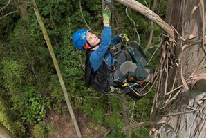 Botanist and Humboldt State University lecturer Marie Antoine climbs New Zealand's tallest tree in Orokonui Ecosanctuary