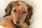 Taking out an insurance policy for your pet is the prudent thing to do. Photo / Thinkstock
