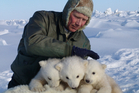 Steve Amstrup holding triplet polar bear cubs in Prudhoe Bay, Alaska. Photo / AP