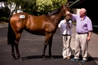 David Ellis casts an eye over the Encosta de Lago-Love Diamonds filly he bought at Karaka. Photo / Dean Purcell