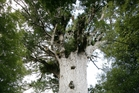 The global study has found for the first time that trees' growth does not slow as they get older and larger - instead, it keeps accelerating.