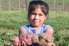 Far North young gardener Nevaeh Davis-Mahoney is proud of her first kumara growing achievements.Photo/Petrina Hodgson