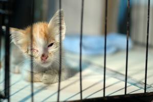 A woman has been sentenced for not seeking treatment for her kitten's ruptured eye. Photo / Thinkstock