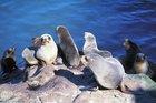 Seals at Akaroa's seal colony.