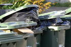 Does your local rubbish collection day fit with your lifestyle?