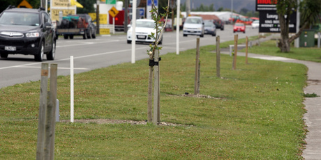 Vandals have snapped and broken trees planted at the southern entrance to Masterton, annoying motorists and council staff. PHOTO/LYNDA FERINGA