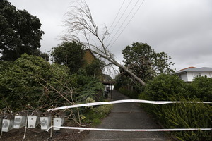 A tree crashed onto a house on Jellicoe Rd, Panmure, as Auckland was hit by the tail end of Cyclone June. Photo / Dean Purcell.