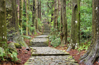 Japan's Kumano Kodo trail is one of only two pilgrimages in the world with Unesco World Heritage status - the other being Spain's Camino de Santiago. Photo / Thinkstock