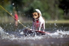 Max the dog enjoys a ride on a boogie board towed by his owner Barry Nottingham through the flooded reserve at Little Shoal Bay. Photo / Richard Robinson