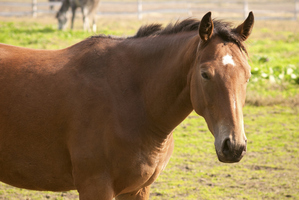 The virus has killed seven mares and infected six others. Photo / Thinkstock