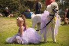 Darby Tindall, 4, with her dog Rain at yesterday's Pride Festival show on Mt Albert summit, Auckland. Photo / Jason Dorday