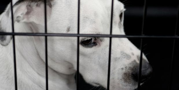 Animals are protected by law under the Animal Welfare Act which allows for prosecution when basic requirements are not met. Photo / Thinkstock