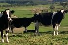 Dairy farmers are particularly vulnerable to an increase in debt servicing costs or a drop in commodity prices.