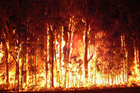 Research estimates bushfires are now 20 times more deadly and 80 times more destructive than a century ago. Photo / NSWRFS