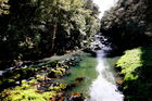 The Whangarei District Council's Parks and Recreation Department submitted the Parihaka and Hatea River reserves as a group of sites for the Green Flag Awards. Photo / Michael Cunningham