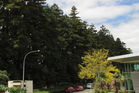The redwoods along the boundary of Kerikeri Retirement Village have won a stay of execution.
