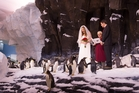 Jeff Rawson and Susanne Grieve met in Antarctica and wanted to recreate the moment at their wedding.