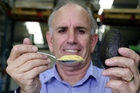 Brian Armstrong holds a tablespoon of avocado powder equal to a whole avocado. Photo/George Novak